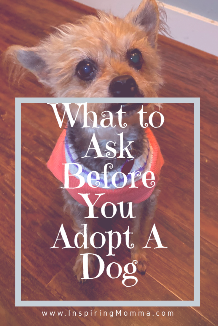 What To Ask Before You Adopt A Dog
