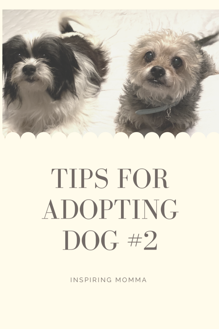 Should You Rescue Another Dog? Here are some Tips For Adopting Dog #2.
