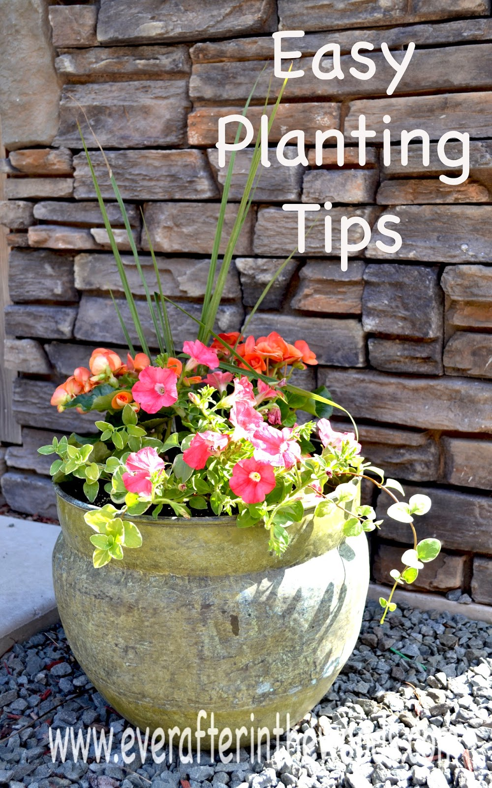 Spring ideas for gardening